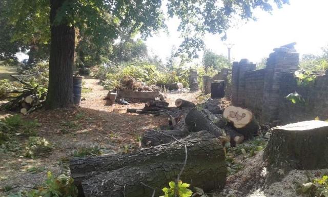Stav zdiva před zahájením prací, provedení kácení stromů, zasahujících do trasy oplocení,  dle posudku dendrologa